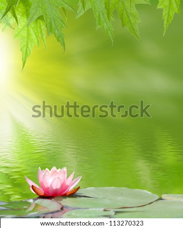 image of a lotus on the water on a green background - stock photo