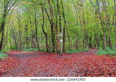 Image of a nature trail with different directions in a colourful vibrant forest as autumn approaches - stock photo