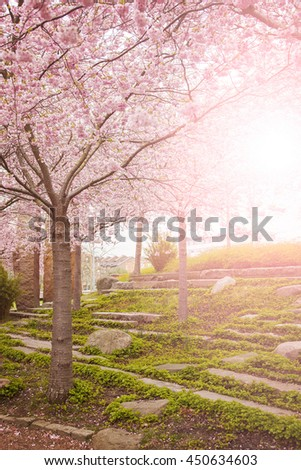 Image of a park with flowering cherry trees. Helsingborg, Sweden.  - stock photo