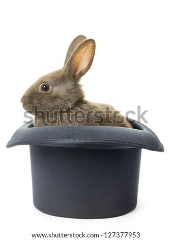 Image of a velvet brown bunny in a top hat against white background. - stock photo