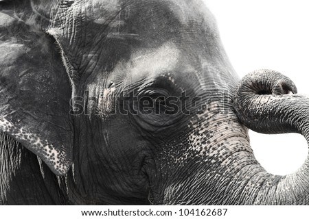 Image of asian elephant head close up - stock photo