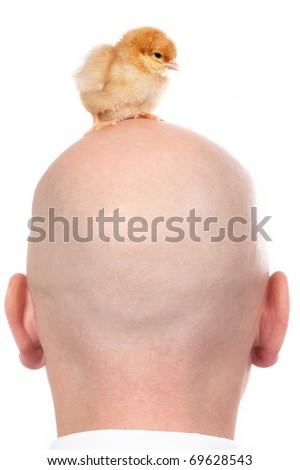 Image of back of the head with chick over - stock photo