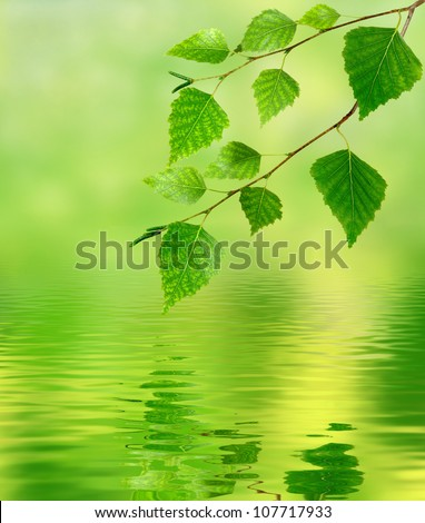 image of birch branches over the water - stock photo