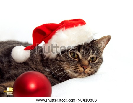 Image  of cat in red Santa Claus hat with Christmas ball on a white background - stock photo