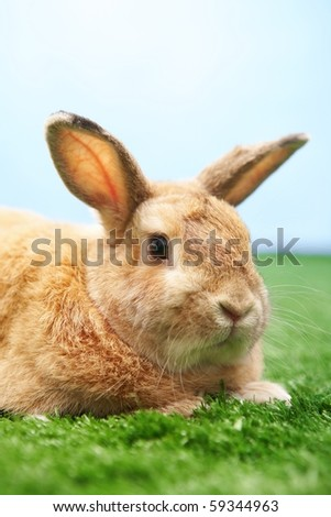 Image of cautious rabbit on green grass against blue sky - stock photo