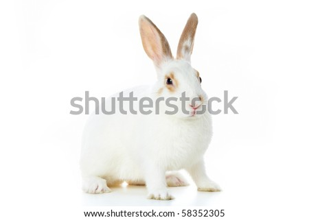 Image of cautious rabbit over white background in isolation - stock photo