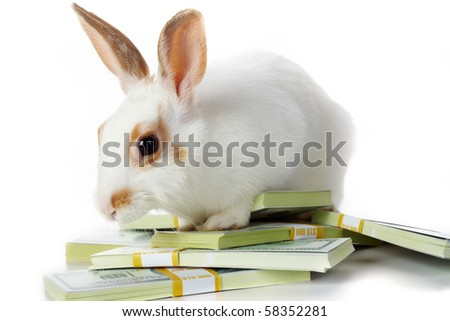 Image of cautious rabbit with dollar bills in isolation - stock photo