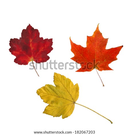 Image of colorful fall leaves isolated on a white background. - stock photo