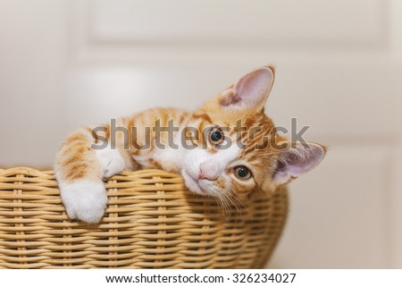 Image of cute ginger kitten in wicker basket.  - stock photo