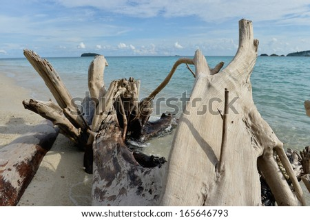Image of dead trees on tropical beach Thailand - stock photo