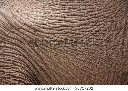 Image of Elephant Skin Texture - stock photo