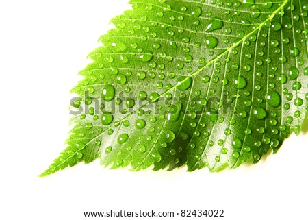 Image of green leaf with drops of water over white closeup - stock photo