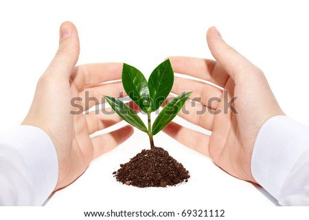 Image of green little plant between male hands - stock photo