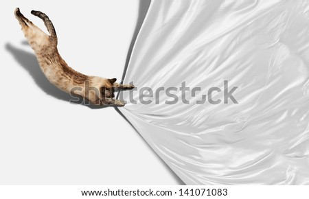 Image of jumping Siamese cat playing with with sheet - stock photo
