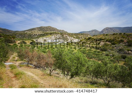 Image of olive grove in the hills of Crete, Greece.  - stock photo