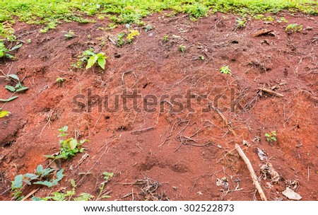 image of plants growing on soil cliff for background usage. - stock photo