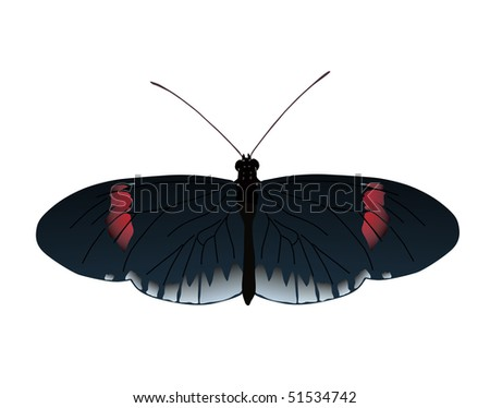 Image of Postman butterfly of Ecuador. Vector image also available - stock photo