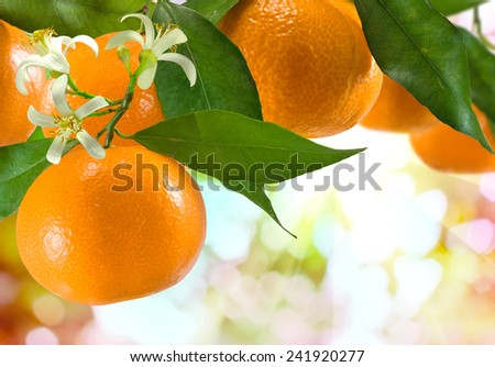 image of ripe sweet tangerine closeup - stock photo
