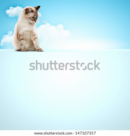 Image of siamese cat sitting on blank banner. Place for text - stock photo