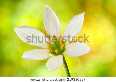 image of  single flower on a yellow background closeup - stock photo