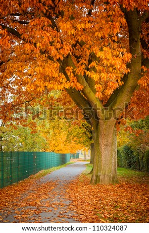 Image of the red autumn oak tree - stock photo