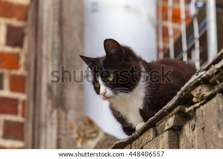 Image of two curious cats.  - stock photo