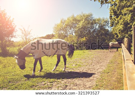 Image of two horses in a pen, wearing fly masks and quilts.  - stock photo