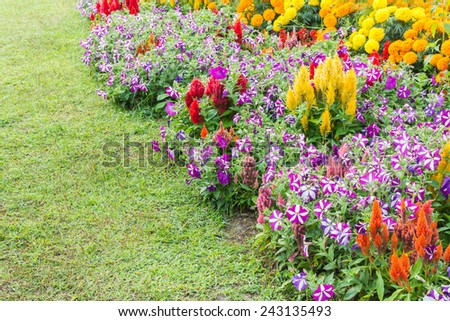 image of Various color flower background wall. - stock photo