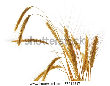 Image of wheat isolated over white background - stock photo