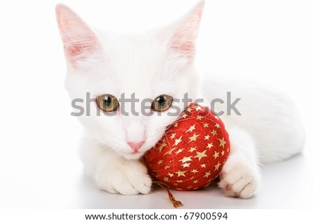 Image of white cat with red toy ball in studio over white background - stock photo