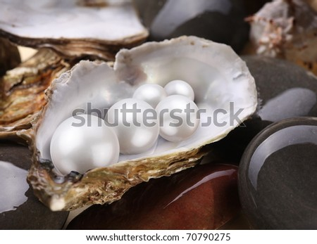 Image placer pearls in a shell on the wet pebbles. - stock photo