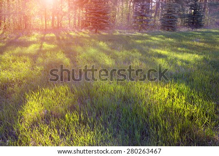 Image with the landscape of morning in the park - stock photo