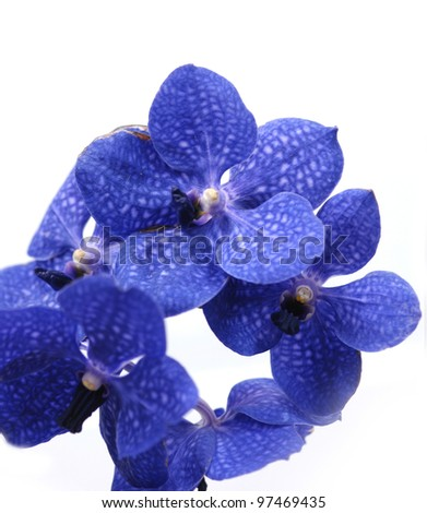 Images of the frame of blue orchids - stock photo