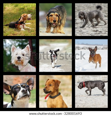 images with domestic dogs, collection of happy pets playing outdoor - stock photo