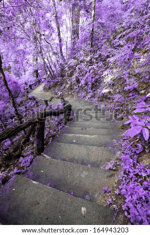 Imagine Purple forest with stair - stock photo