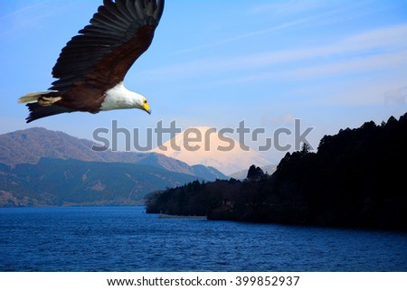 Imaginery image of an African fish eagle flying towards the holy mount of Fuji - stock photo