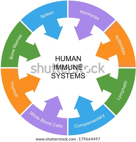 Immune System Word Circle Concept with great terms such as spleen, hormones, antibodies and more. - stock photo