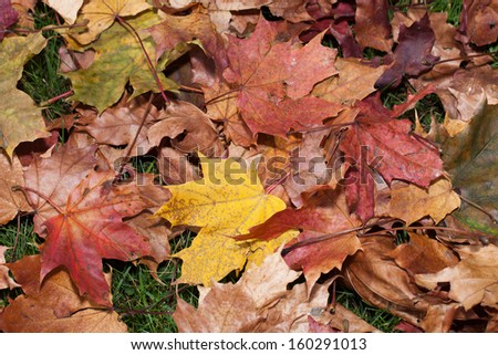 impression of leaves and autumn colors - stock photo
