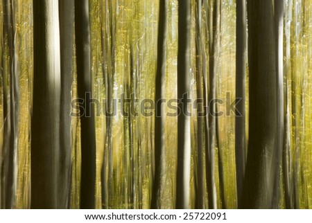 impressionistic forest - motion blur with sharp details - no digital filters - stock photo