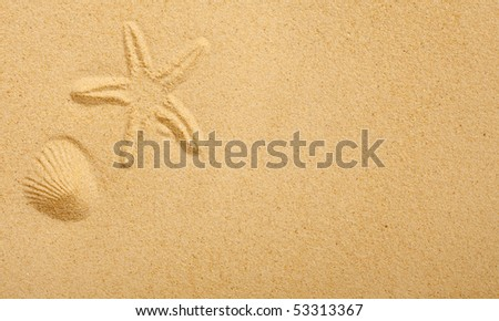 Imprints of seashells in beach sand - stock photo