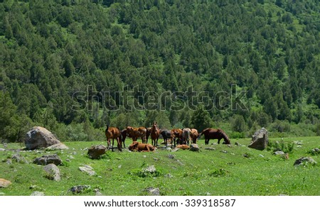 In Alamedin gorge - stock photo