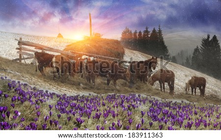 In March-April after a winter in the mountains of unstable weather, and replaced by the warmth the sun can come quickly alpine cold, strong wind and sleet and then freezing horses and cows on pasture  - stock photo