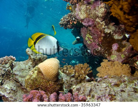 In Red sea - stock photo