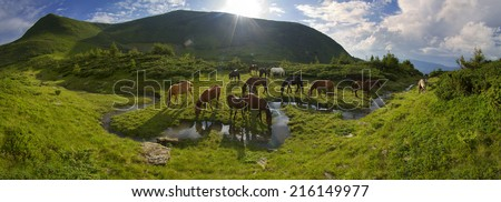 In the alpine valley of the Carpathian Mountains, near Crooked Creek meanders magical beautiful free mountain grazing horses, where the local cowboys released for the summer to live in the open air - stock photo
