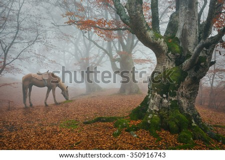 In the autumn misty forest trees grazing horse. Fog in the fairy forest. - stock photo
