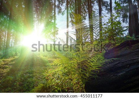 In the backlight warm sunbeam light in the mountains forest through the leaves of a fern. In a shallow DOF. - stock photo