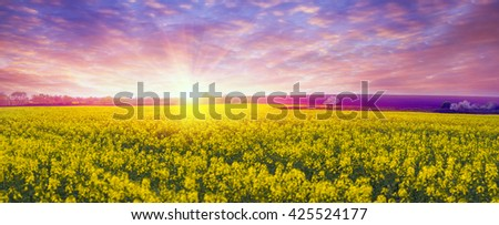 In the Chernivtsi region of Ukraine near the mountains farmer grows canola European varieties. Organic farming on the background of modern technology the beauty of nature in spring - tableau