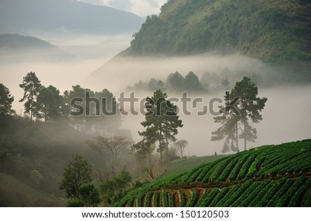 In the mist. - stock photo
