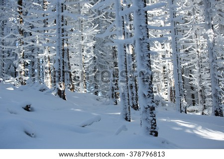 In the snowy woods - stock photo