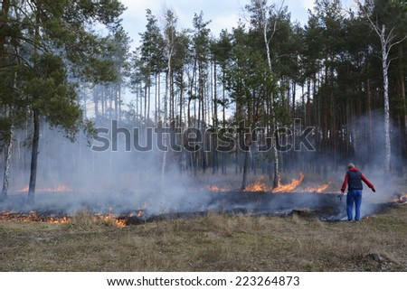In the spring forest man extinguishes the fire in a burning birch forest. - stock photo